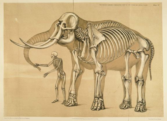 elephant-grand