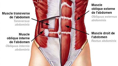 muscler-le-bas-des-abdominaux